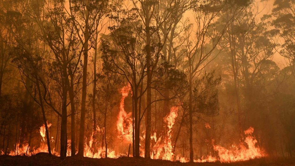 Trees engulfed by fire