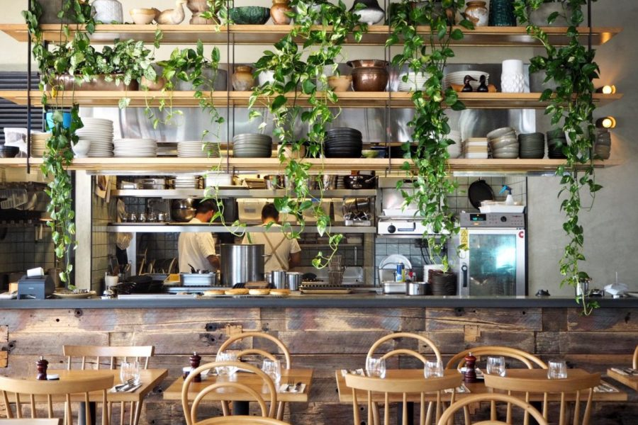 wooden shelves and green vine growing down