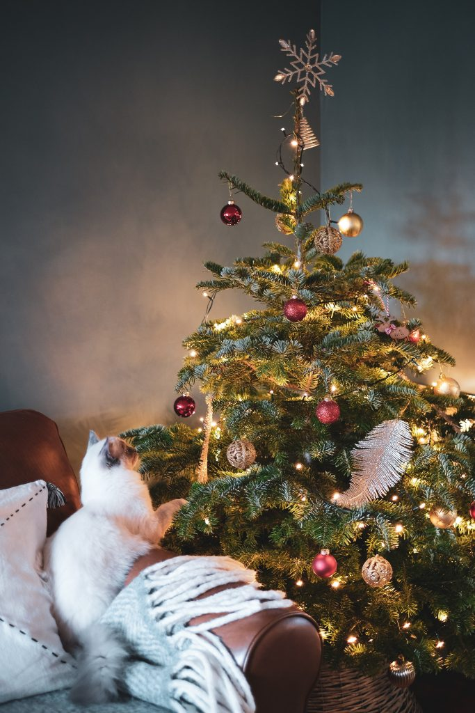 A cat on a couch sits and stares up at a Christmas tree. Source: Unsplash.
