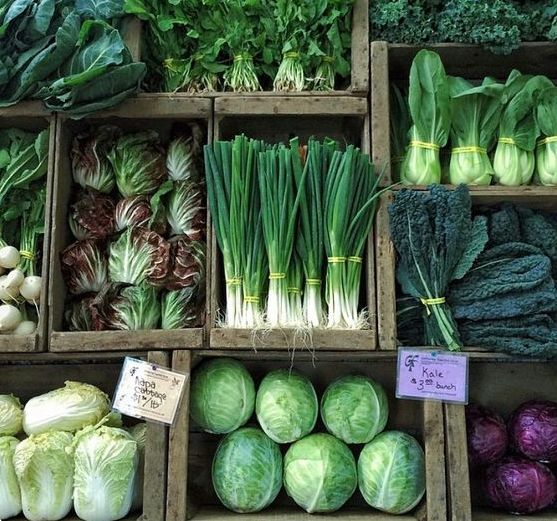 a shelf of green vegetables. Dark leafy greens include kale, spinach, chard, rocket, bok choy and broccoli. Purple cabbage.